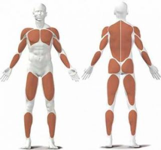 muscles sollicites par velo elliptique