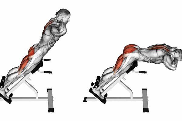 muscles travaillés avec banc lombaire